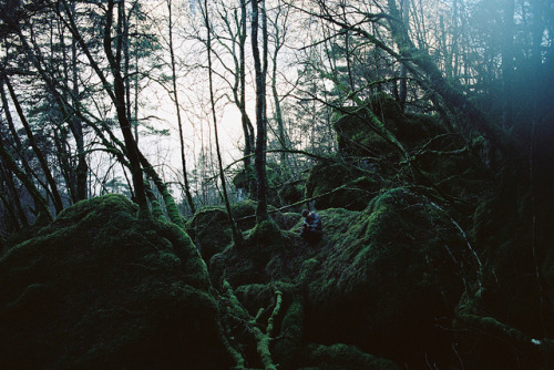 Dark woods by xTorfinnx on Flickr.