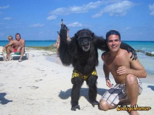 collegehumor:  Man and Monkey Hit the Beach  Stop fooling around Dr. Bananas! If we're going to catch the diamond thieves we're going to have to get to work.  I'm guessing this is before he gets his face ripped off