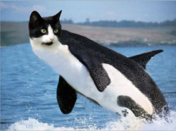 the-vashta-nerada:  cuntlessfacks:  brb dying omfg  #brb #cat #catwhale #dying #funny #kitty #laugh #laughter #niggaquisha#omfg #omg #photoshop #pussy #sea #summer #tumblr #tumblrbot#tumblrradar #whale #followers #promo #promotion #promotion groups #one direction #onedirection #justin bieber #harry potter #hunger games #teen wolf do you have enough tags there buddy