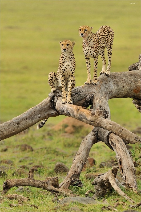 "magicalnaturetour:  ""Observing"" by Elmar Weiss:)"