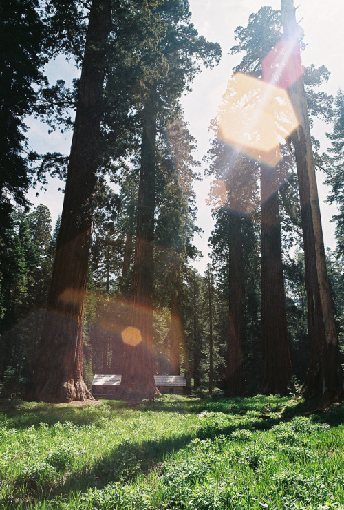 bohemian-thoughts:  to be able to wake up to the massive presence of trees like these is only my dream.
