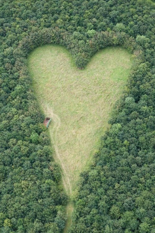milktree:  A heart-shaped meadow, created by a farmer as a tribute to his late wife, can be seen from the air near Wickwar, South Gloucestershire. The point of the heart points towards Wotton Hill, where his wife was born.  So sweet. So romantic!