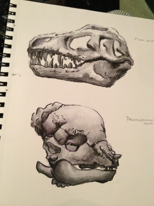 malloryhartart:  Drawing dinosaurs at the museum today.