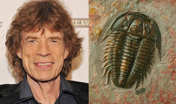 "Rolling Stones' ageless frontman Mick Jagger is not technically prehistoric, but paleontologists have long had a weird affinity for him. In 1995, a newly discovered species of trilobite (like the one pictured here) was named aegrotocatellus jaggeri after the gyrating rock singer responsible for hits like ""Get Off of My Cloud."" The Latin word aegrotocatellus translates to ""sick puppy."" 6 other species named after famous people"