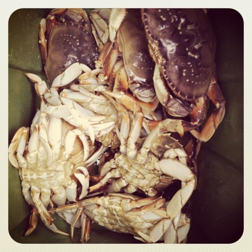 I have crabs. (Taken with Instagram)