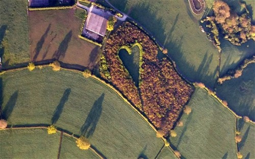 Widowed farmer creates love note to his wife out of thousands of oak trees