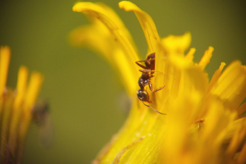 Ant & fly on Flickr.