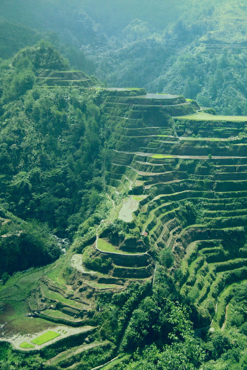 opcion:  banaue rice terraces (by christine day)