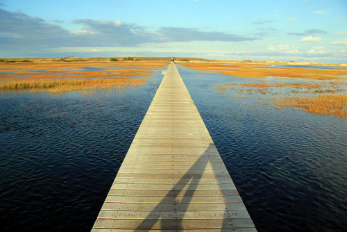 bfastwithtiffany:  Cape Cod Boardwalk