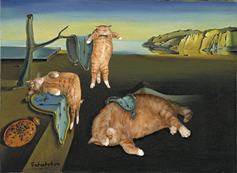 The persistence of the kittens (via giannibugnosagace)