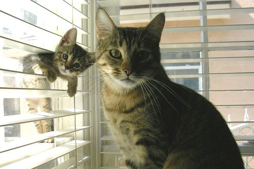 omg, too cute! mama and baby!!! i really wish i had a cat.. i honestly don't think i'd be as bothered about no longer having a bf if i had a cat hahahaha