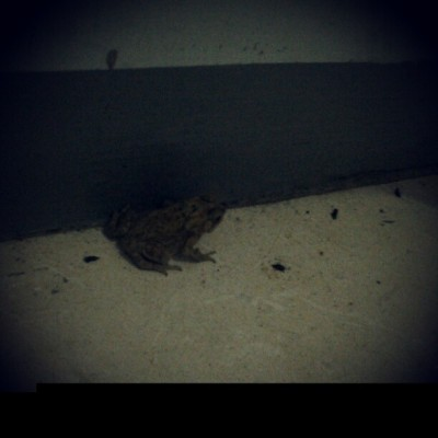 A Frog :3 (Taken with Instagram)