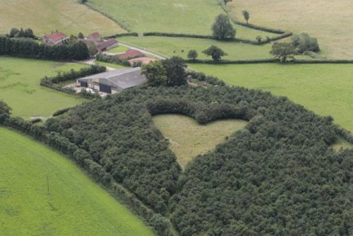 akapearlofagirl:  Farmer plants heart-shaped meadow for late wife