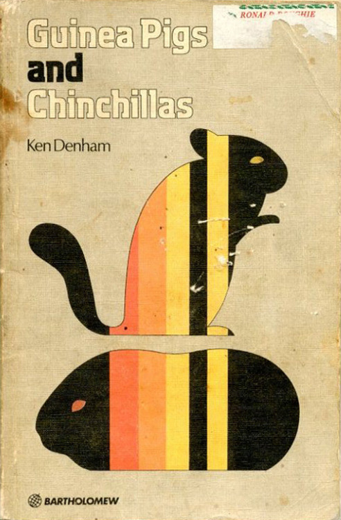 c86:  Ken Denham - Guinea Pigs and Chinchillas, 1977 That is the best illustration of a guinea pig I have ever seen via Stopping Off Place