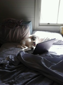 This is my boyfriends dog, using the laptop to look up male dogs ;)