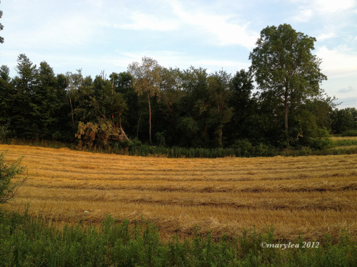 Fields of hay. Heading home last night. July 13, 2012.