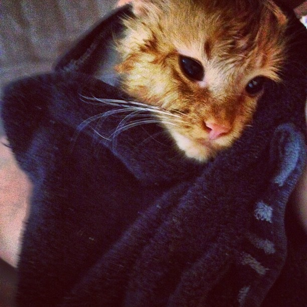 Wet #kitty #cute #cat #catsofinstagram  (Taken with Instagram)