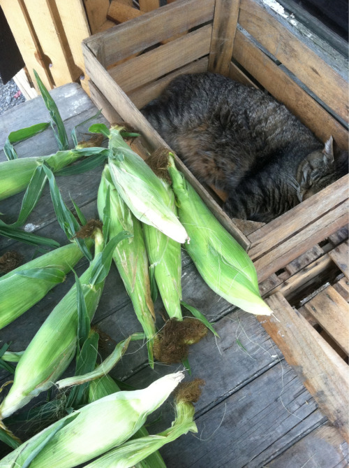Noticed this little one napping near the corn table at the organic farm.