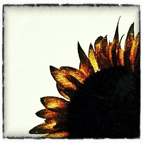 sunburnt (Taken with Instagram at Cat Garden)