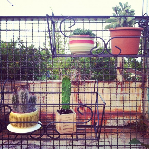 #cactus collection (Scattata con Instagram)