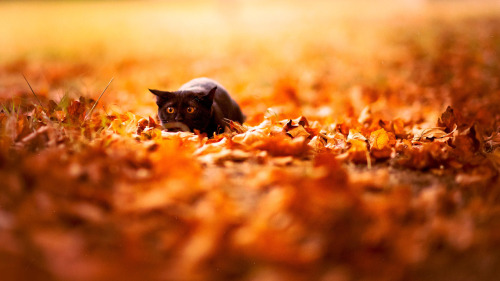 gothtriggers: If Autumn leafs give you strength after a life-sucking Summer…