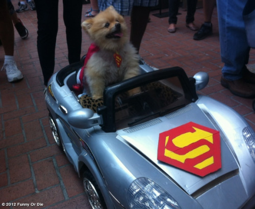 funnyordie:  Comic-Con 2012 Cuter than a speeding bullet.
