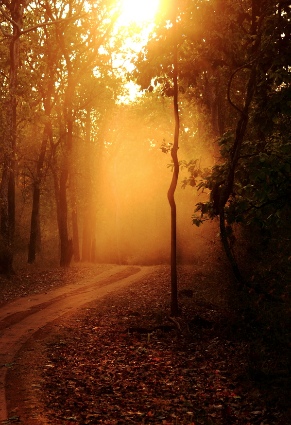 ecocides:  The golden forest | image by Rahul Roy Choudhuri