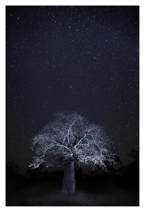 kilele:  Baobab tree and the Night Sky in Mali Photo by Roy Zipstein