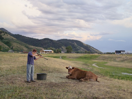 Mr. Isaacson Killing the Cow, Wyoming, Lucas Foglia.