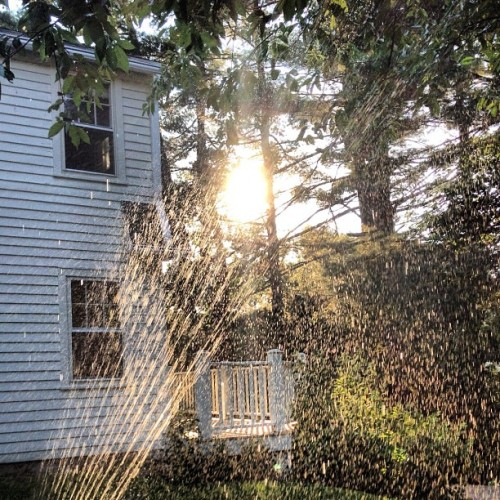 Watering the #garden as the #sun sets.  (Taken with Instagram)