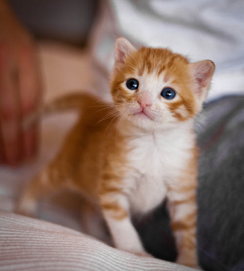 photogenicfelines: (Aurelio Hernández)