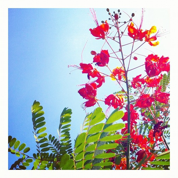 flame #tree #flower  (Taken with Instagram)