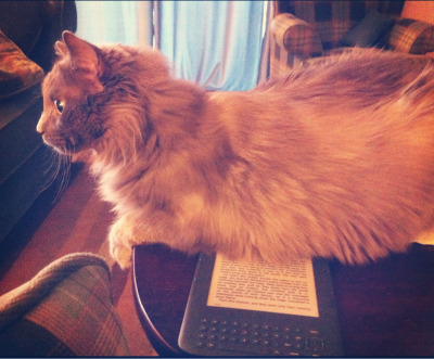 ndrummond:  She got up on the tv tray and sat on my kindle. Guess she wanted me to pay attention to her instead of reading!