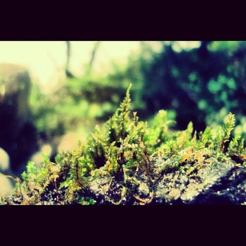#little #world #nature #instanature #green #mexico #mextagram #water  #love #instagood #tweegram #photooftheday #iphonesia #instamood #me #cute #igers #iphoneonly #instagramhub #picoftheday #tbt #girl #instadaily #jj #bestoftheday #sky #igdaily  (Tomada con Instagram)