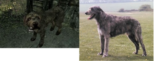 I think the dogs in Skyrim are supposed to be Irish Wolfhounds.