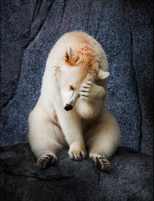 kingdom-of-animals:  Oh No, Not Another Photographer! by Scott Kroeker
