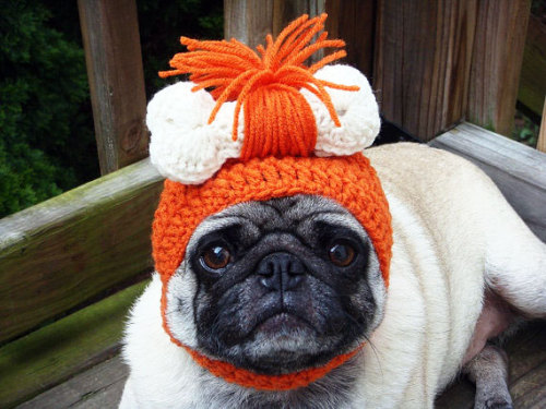 10 Hilarious Fashion Accessories For Your Dog Alex Wain, sobadsogood.com We've show­cased a fair few arti­cles about cats here on So Bad So Good, from cats that make their own movies, to felines in high end cou­ture to even kit­ties in tanks – so we thought it about time to show some love to our canine friends.And w…