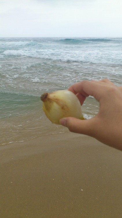 Onion from the sea ..?