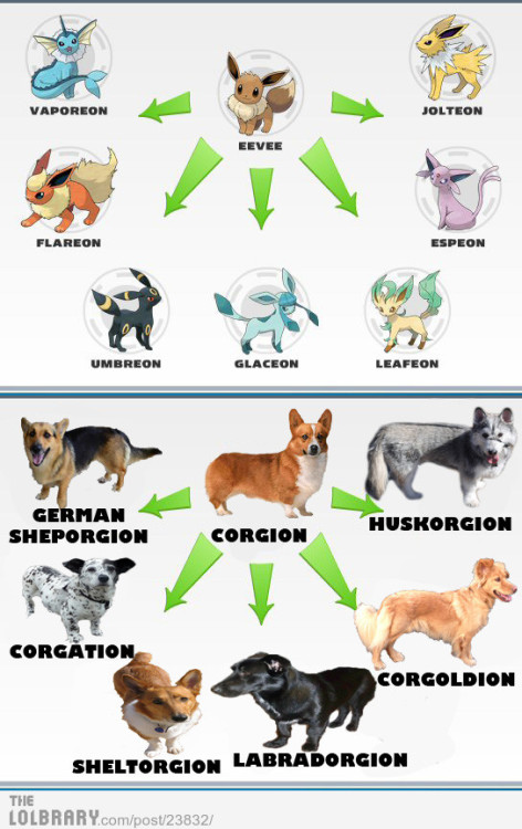 thelolbrary:  Corgi's are the Eevee of dogs.Follow this blog for the best new funny pictures every day  P