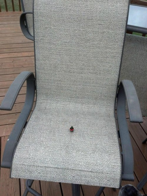 the-absolute-funniest-posts:  this seat is taken My lovely followers, please follow this blog immediately!