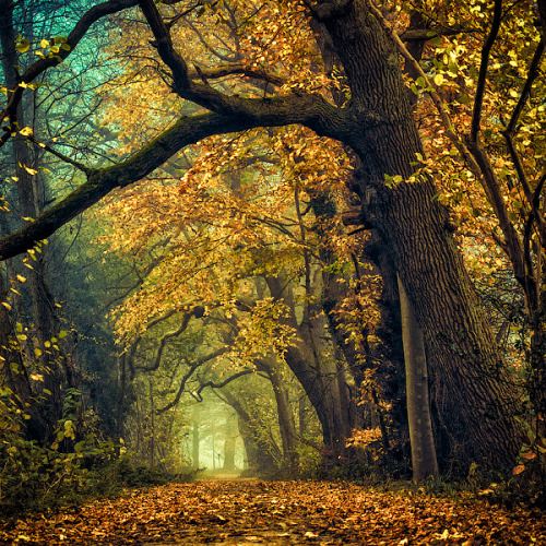 Deeper shades of Autumn by =Oer-Wout on deviantART