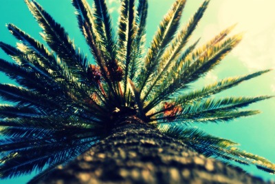 tewaukupics:  Palm Tree