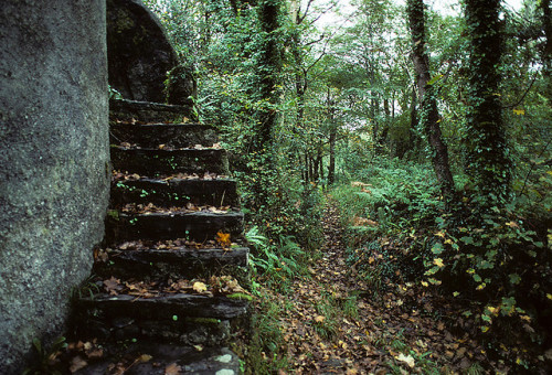 addictedtoprogress:  Hidden Stairway by padams on Flickr.
