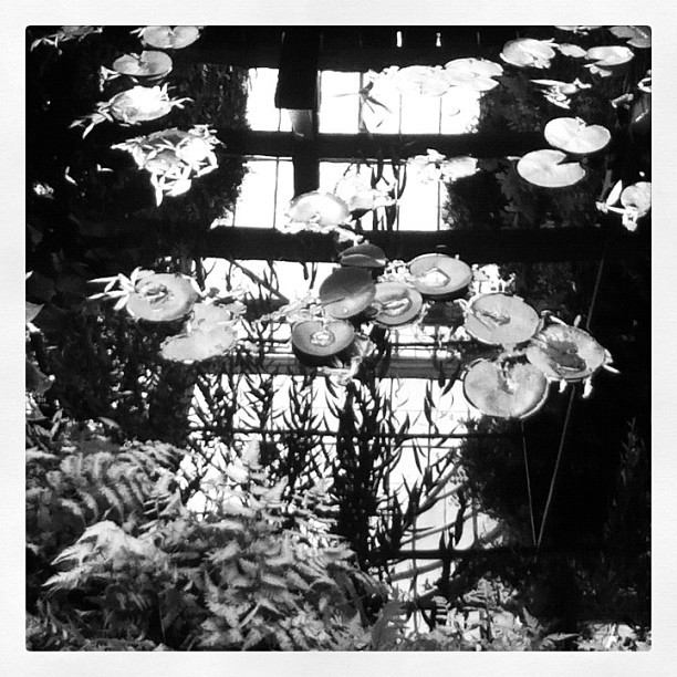 I'm really surprised by how beautiful Monet's Garden looks in black and white. ~AR najelith:  #inkwell #monetsgarden (Taken with Instagram at Monet's Garden at The New York Botanical Garden)