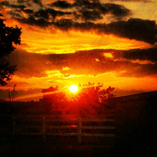 Yesterday's sunset. #sky #clouds #sun #sunset #trees #fence (Taken with Instagram)