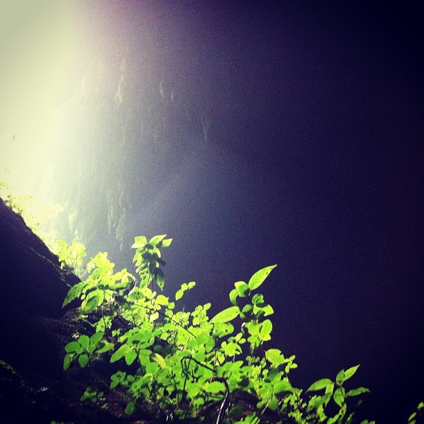 Camuy caves entrance (Taken with Instagram at Las Cavernas del Rio Camuy)