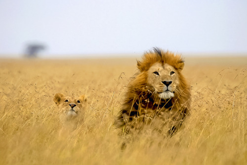 animals-animals-animals:  Alert (by Tim Allen)