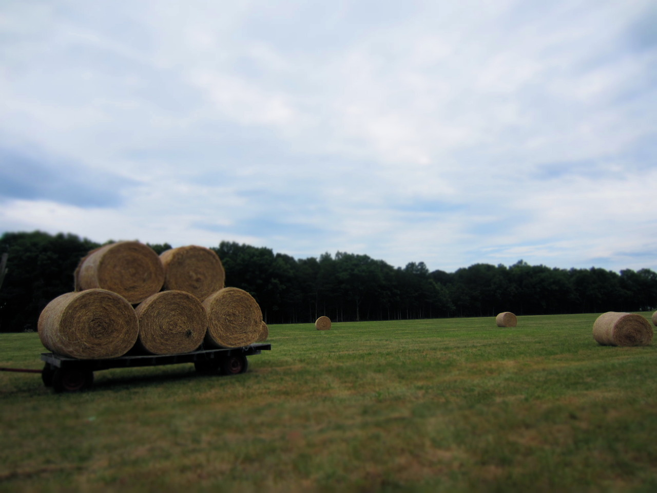 let's go for a roll in the hay