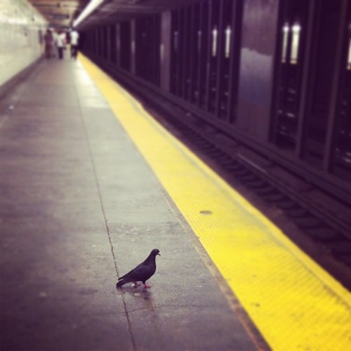 Pigeon waiting for the train (Taken with Instagram)