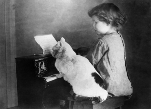 hautecatture:  A girl on a toy piano with a kitty studying the score, 1930